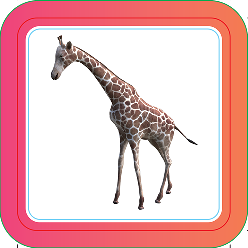 Giraffe - Interactive Cards